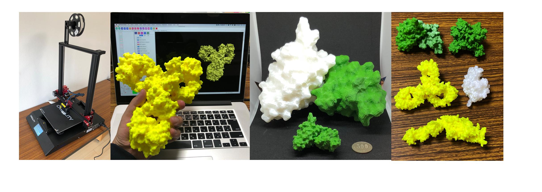 3Dプリンターによるタンパク質模型の作成・販売